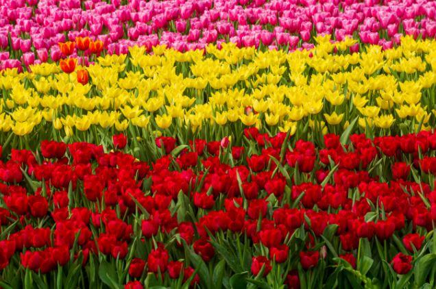 Spring Property Market - Bloom or Gloom? - September Market Update